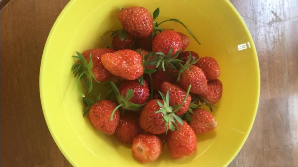 Strawberries May 2019